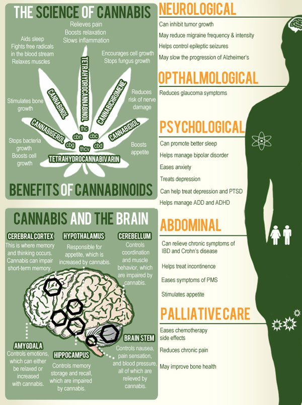 cannabis-cbd-brain-health-science